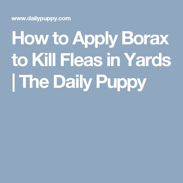 How to Apply Borax to Kill Fleas in Yards | The Daily Puppy