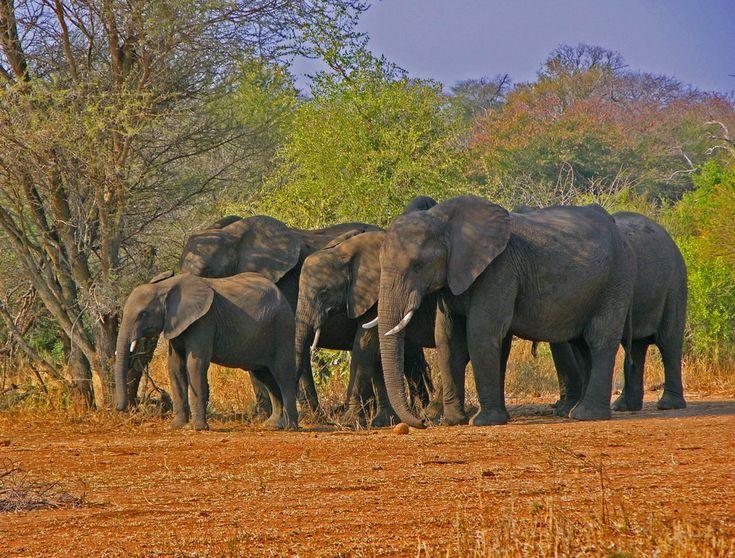 """Национальный парк Крюгер — самый старый национальный парк Африки, он был основан в 1898. Крюгер расположен в пяти часах езды к северу от Йоханнесбурга и является родиной огромного разнообразия дикой природы, включая известную """"Большую Пятерку"""" (буйвол, слон, леопард, лев и носорог)."""