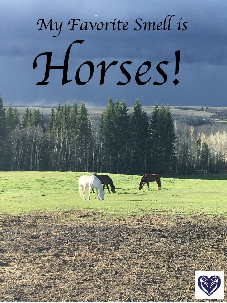 Horses, fresh hay and shavings are the best smell in the world! #Quotes