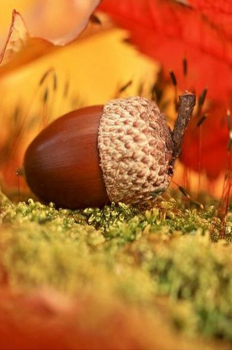 1000 images about acorns other small natural beauty on for How to preserve acorns