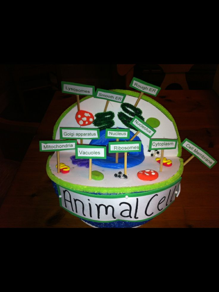 Best 25+ Animal cell project ideas on Pinterest | Cell ...