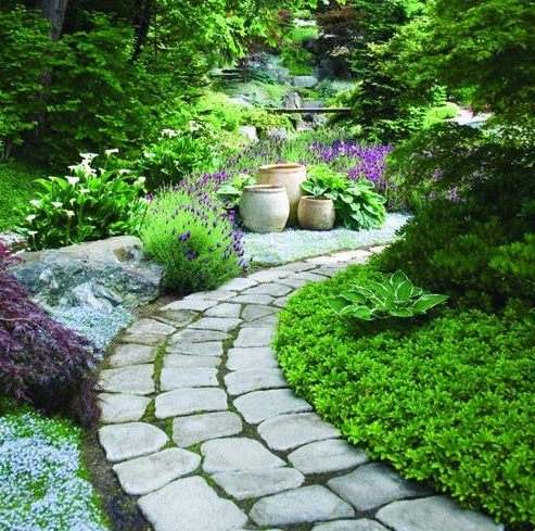 find this pin and more on ground cover ideas - Ground Cover Ideas