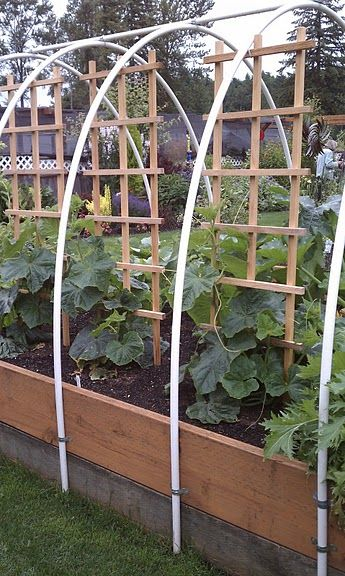 Raised Beds done right: