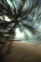 Palme am Meer, Sao Tome, Sao Tome und Príncipe, Afrika