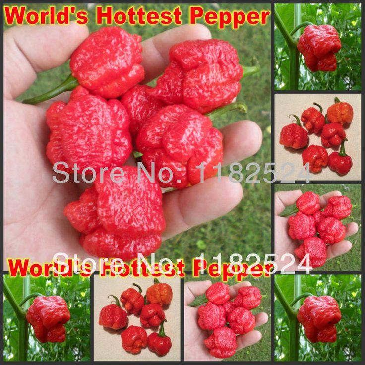 Горячих перец - тринидад моруга скорпион перец семена овощных культур ( 50 семена )