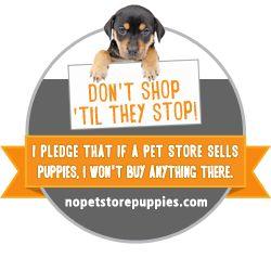 Take the Pledge: Support ASPCA No More Pet Store Puppies Campaign!