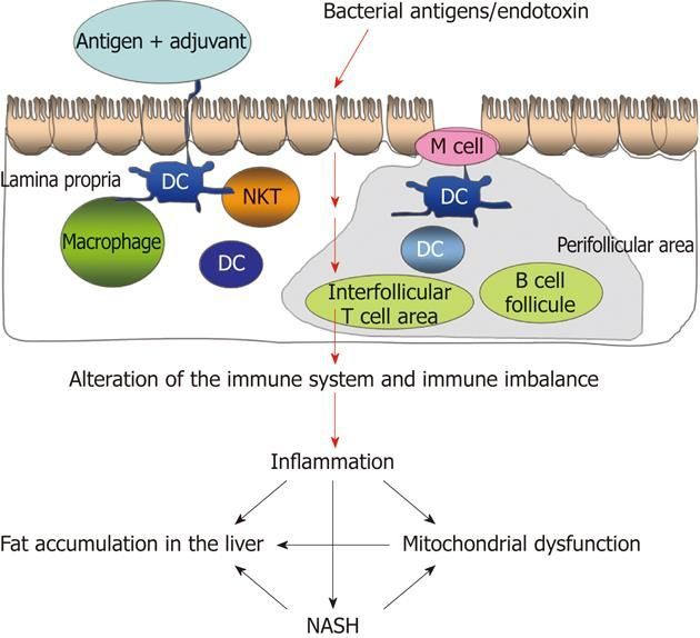 Endotoxin and Other Microbial Translocation Markers in the Blood: A Clue to Understand Leaky Gut Syndrome