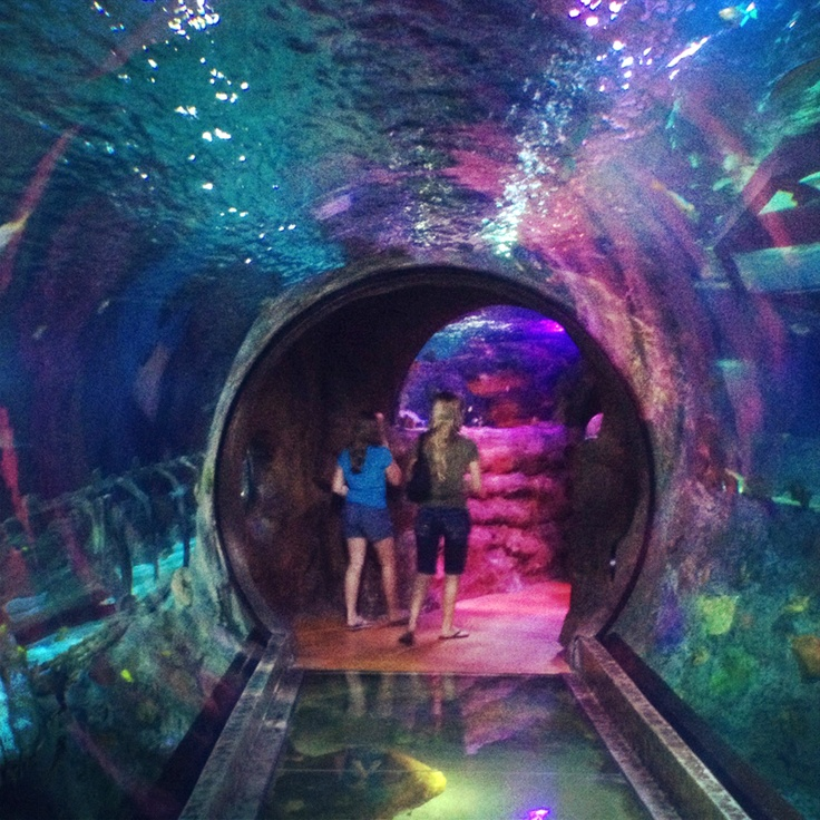 This Is A 360 Degree Shark Tunnel At Sea Life Aquarium In