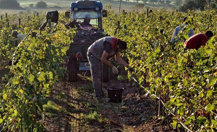Perelada cierra una gran cosecha 2013 para vinos blancos y tintos http://www.vinetur.com/2013111513908/perelada-cierra-una-gran-cosecha-2013-para-vinos-blancos-y-tintos.html