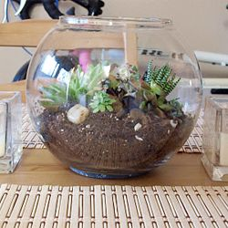 Make a mini terrarium with instructions from National Geographic