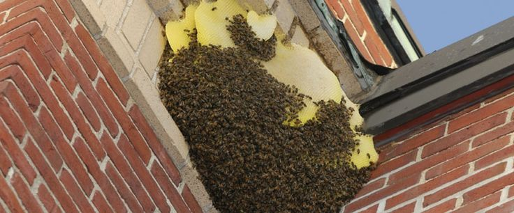 wespennest in de hoek op de muur bij een serre