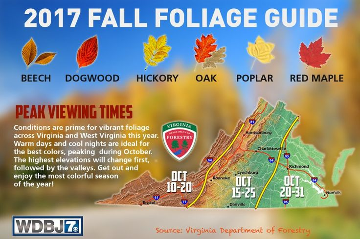 2017 Fall Color Schedule for Virginia's Blue Ridge | Graphic courtesy of WBDJ7 Weather & Virginia Department of Forestry