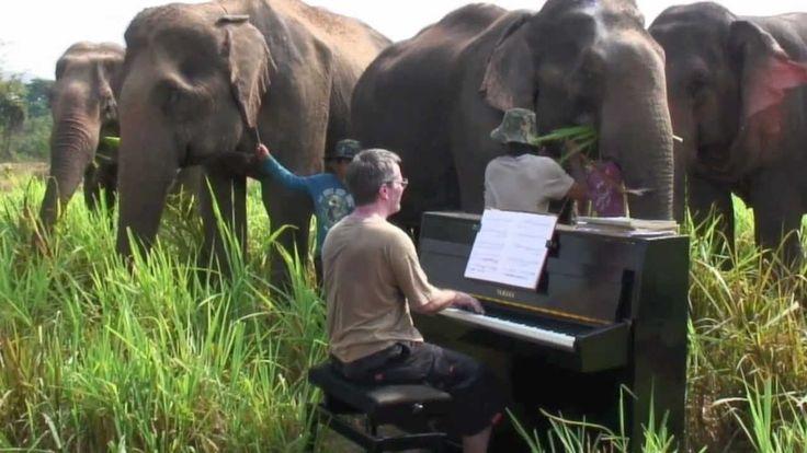 Musicus laat olifanten genieten van Beethoven