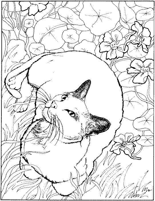 Pretty Kitty Coloring Page