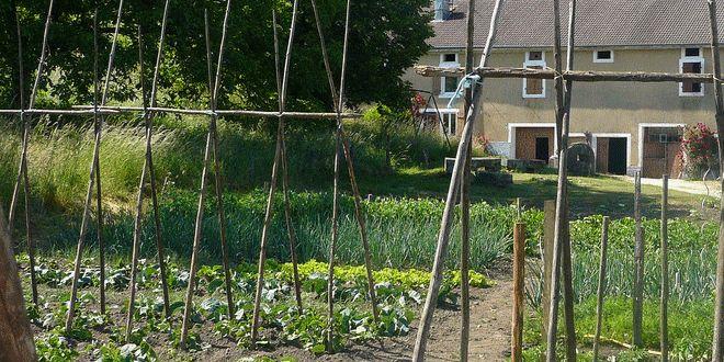 4 astuces pour une culture du haricot vert simple et productive ! | Jardipartage
