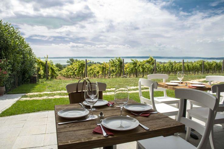 Biztos, hogy megéri ide felmászni? - 10 látványos borterasz az északi partról   WeLoveBalaton.hu