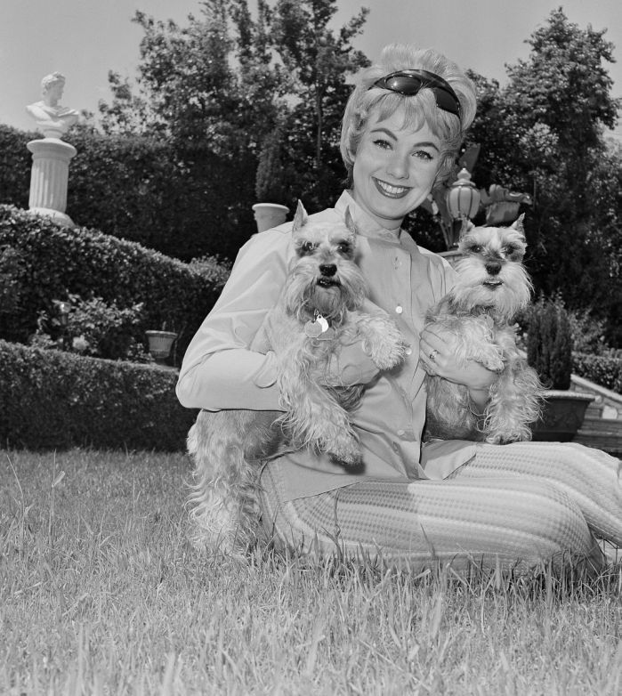 Relaxing in the garden of her Bel Air, Calif., home home, film star Shirley Jones poses with her pet schnauzers, Little Bit, left and Stoney.(AP Photo)