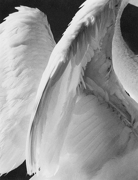 """""""His wings were the most beautifull thing she had ever seen, or dream of. But beyond their magnificent appeareance, it was the warm she felt running through her bones that shut her brain and broke the last chains around her heart, letting it wide open and vulnerable"""""""
