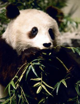 How to Make a Diorama of a Panda Bear Habitat