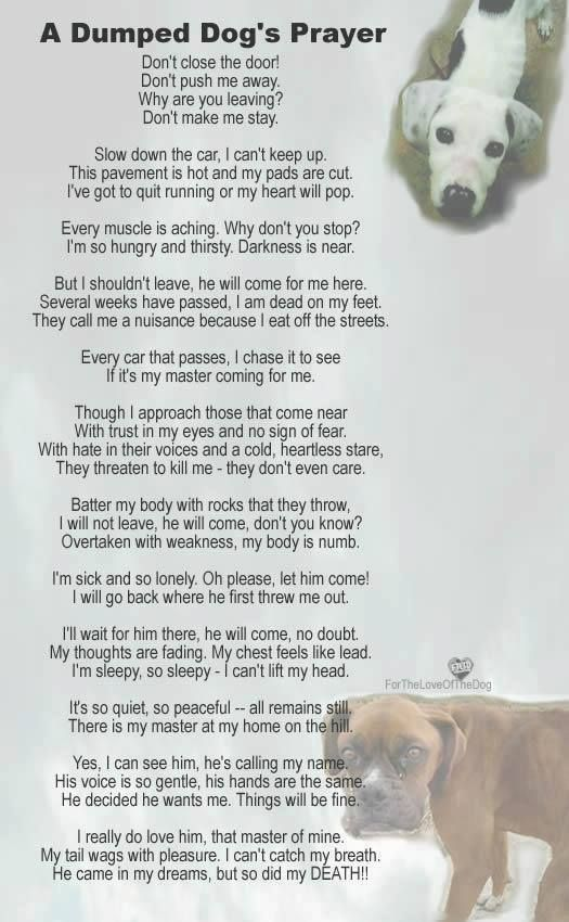 A Dumped Dog S Prayer Poems Or Thoughts About Pets