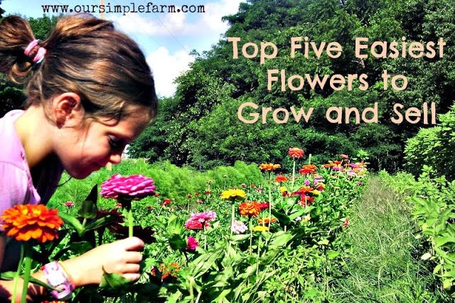 The Top Five Easiest Flowers to Grow and Sell - Our Simple Farm