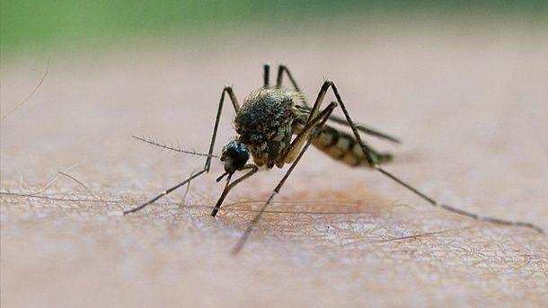 Mückenschutz bei Stiftung Warentest: Nur 4 Sprays schützen gut. Die Stiftung Warentest hat Mittel gegen Mücken getestet. (Quelle: dpa)