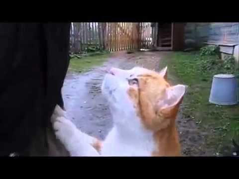 Самые смешные истории с кошками!