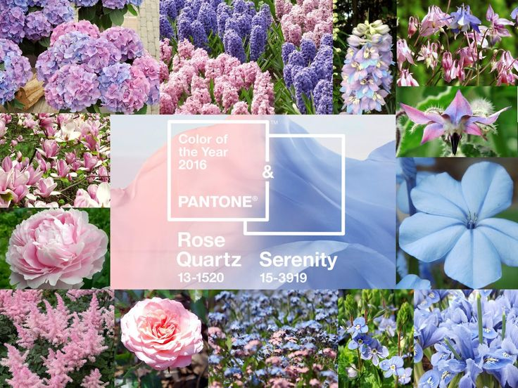 rose quartz & serenity - kwiaty i inspiracje