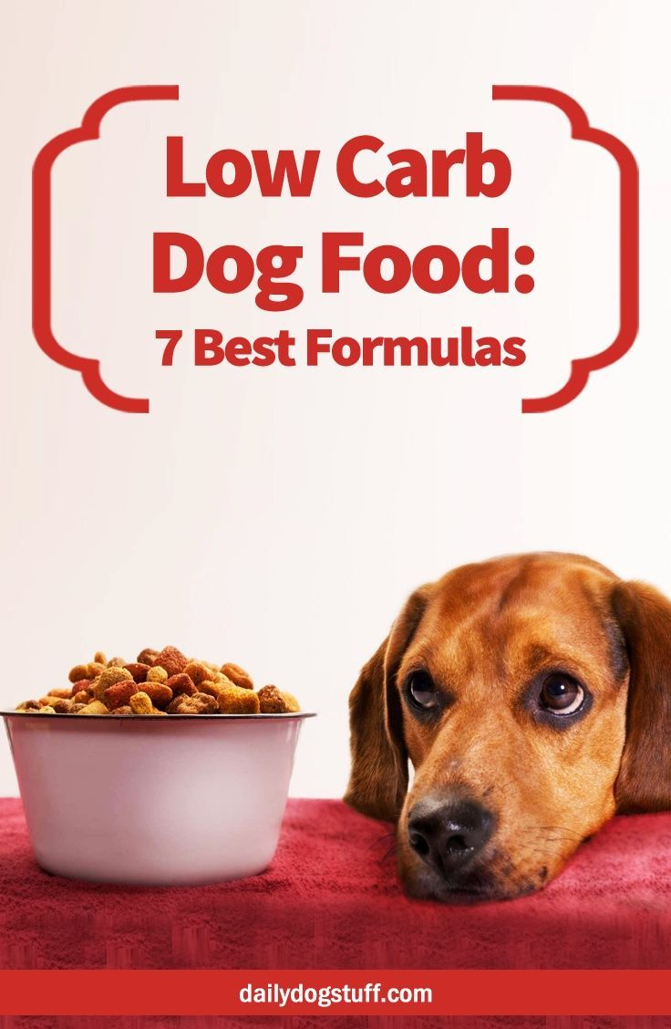 22 Homemade Dog Food Recipes Free Pdf Download How To Make