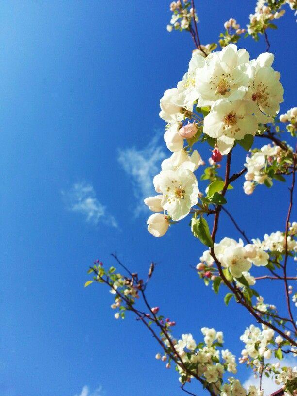 꽃.flower.매화
