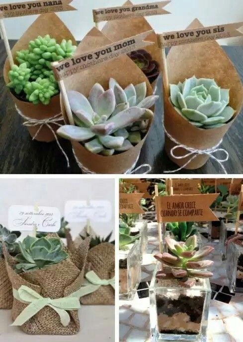 Cactus y suculentas para regalar en fiestas