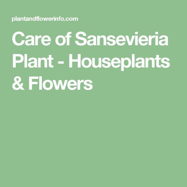 Care of Sansevieria Plant - Houseplants & Flowers