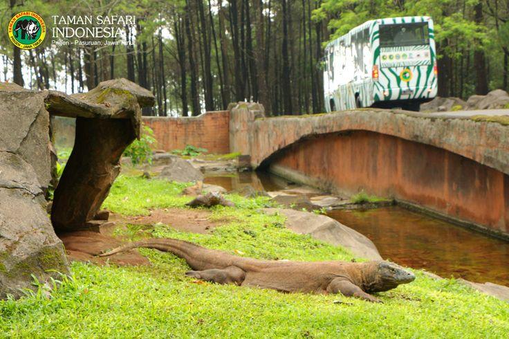 Feel Amazing sensation adventure meet with more 2000 rare species. Only in Safari Park II Indonesia, The Biggest Safari Park in Asia