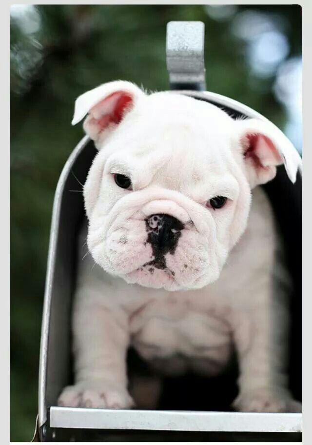 Best Animals Images On Pinterest Baby Animals Cutest Puppy - 18 hilarious brand new animal names that are so much better than the originals