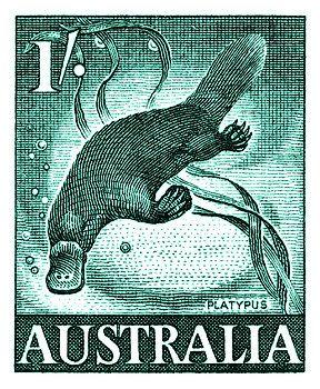 platypus,marsupial,australia,outback,vintage,postage stamp,native fauna,mayo,postal,ephemera,ozzie,uluru,ayers rock,aquatic,wildlife
