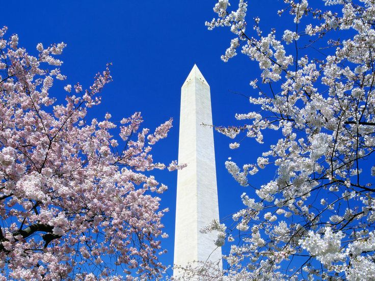 Washington Monument. Washington, DC.Washington Monumentbeauti, Cherries Blossoms, Buckets Lists, Favorite Places, Washington Monuments, Blossoms Time, Washington Dc, Memories 11/9, Cherry Blossoms