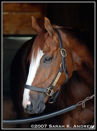 The Queen of Saratoga, Rags To Riches by Rock and Racehorses, via Flickr