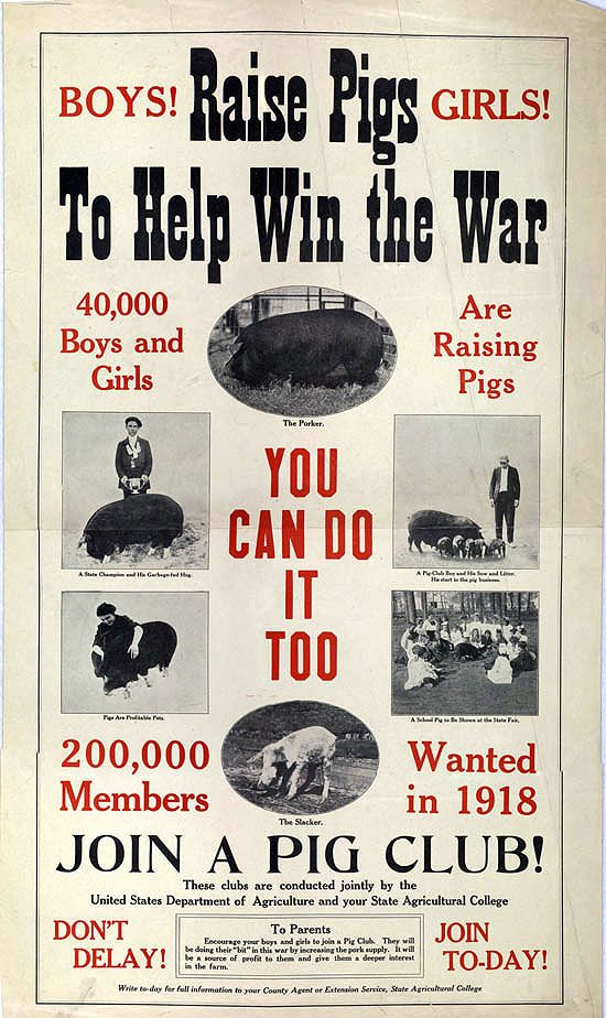 raise pigs to help when the war.
