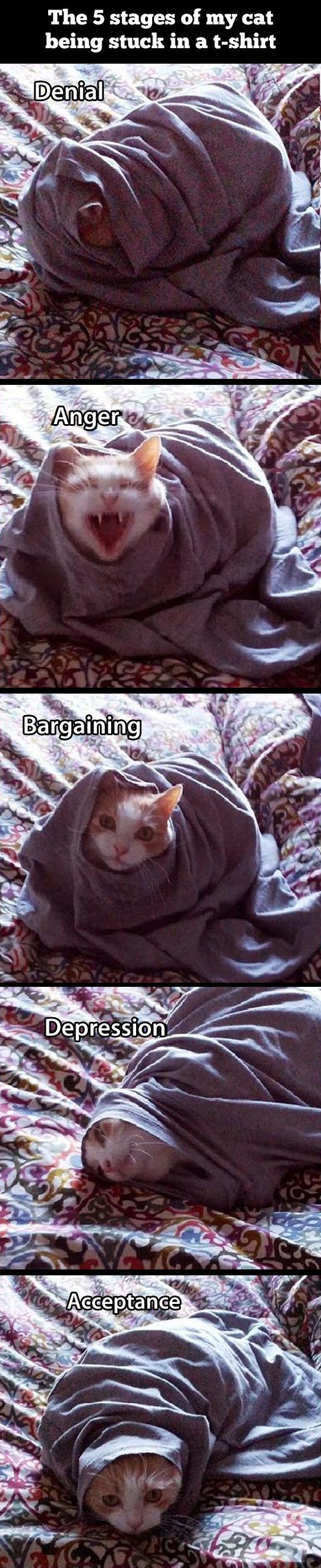 The five stages of a cat stuck in a t-shirt.
