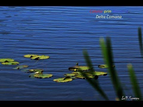 Pulsul orasului: Calator prin Romania-Delta Comana