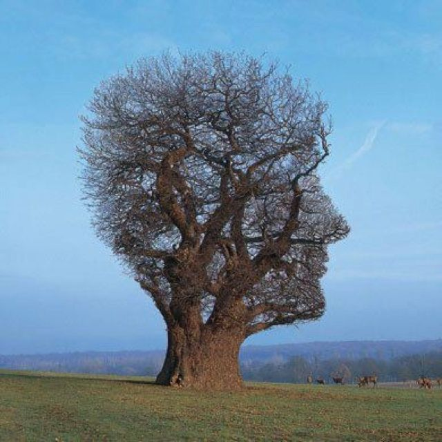 rare trees . Resembles Rod Steward.