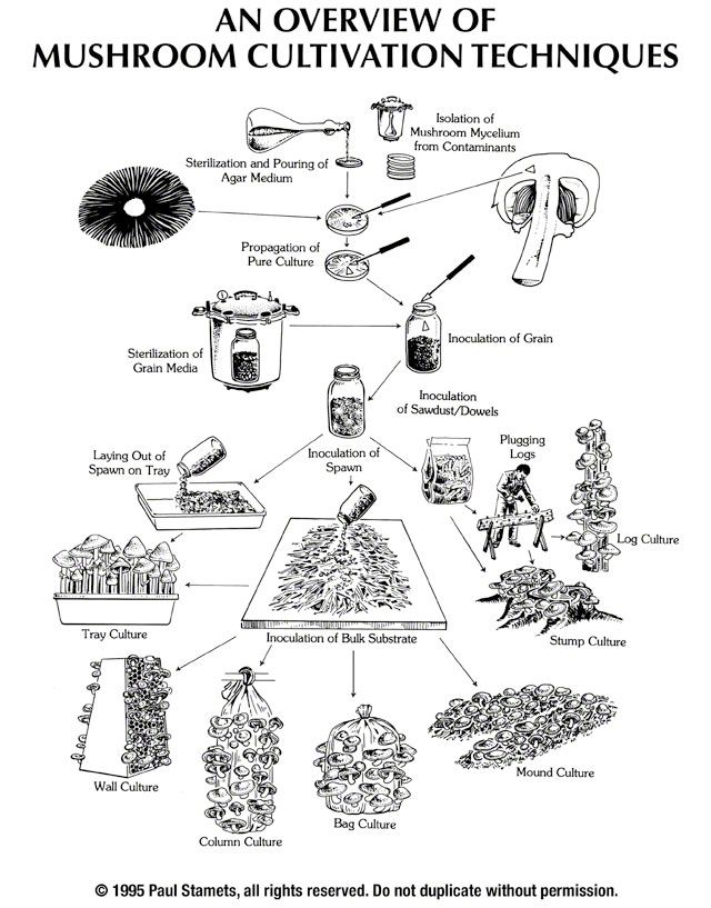 A Pictorial Overview of Mushroom Tissue Culture and Cultivation