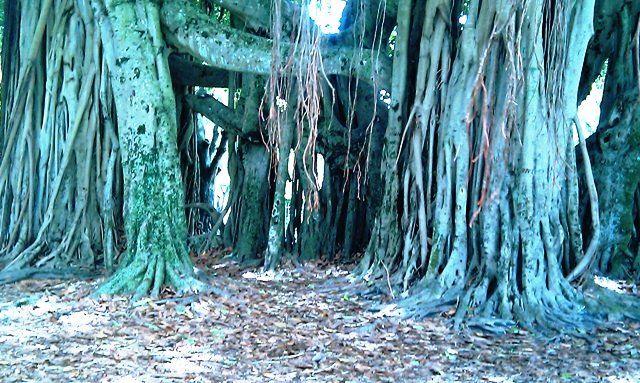 Merrie Christmas Park, Coral Gables, FL | Trees, Flowers, Plants ...