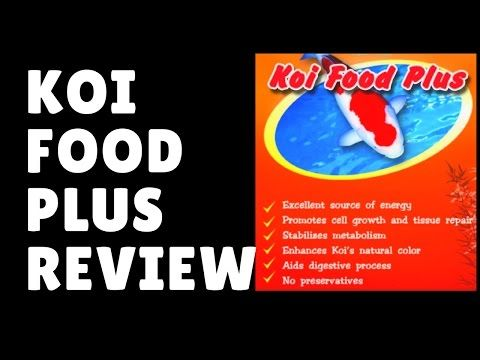 How to keep and breed koi fish and goldfish cheap koi for Cheap koi food