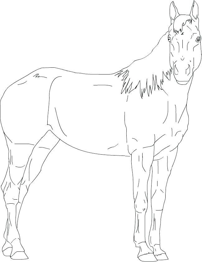 Quarter Horse Coloring Page Youngandtae Com Horse Coloring Horse Coloring Pages Horse Outline