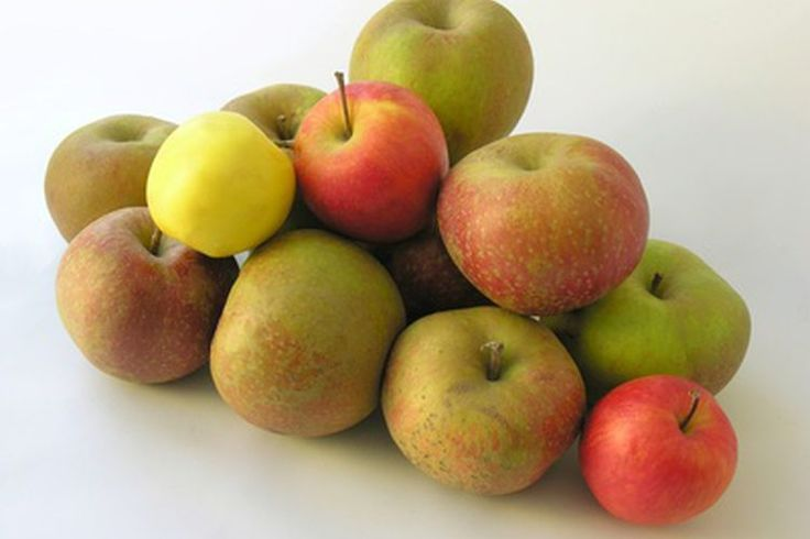 Preescolar: Partes de una manzana | Muy Fitness