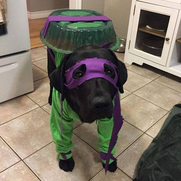 Dogatello La déguisement de Donatello des Tortues Ninja version labrador. Un drôle de déguisement pour chien !
