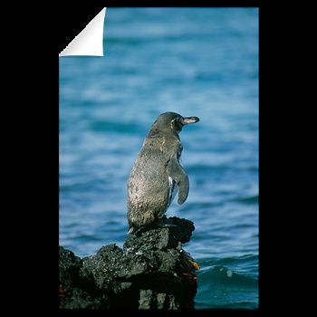 Pacific Islands, Galapagos Islands Wall Decal 1