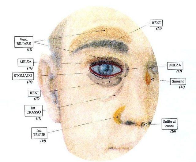 Vi siete mai chiesti perché vi rimangono le occhiaie anche se dormite 10 ore a notte? O perché quando siete stressati vi vengono dei brufoletti sempre nello stesso punto del volto? E quelle macchie, eczemi o rossore che proprio non si spiegano? Sono tutti segni che il vostro corpo vi sta dando… e se sapete …