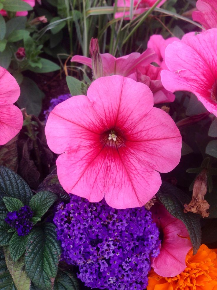 The normal pink, in a normal flower, in a normal space.